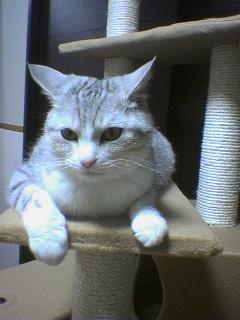 20070601●猫たわー8 070519_2112~01.jpg