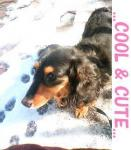 COOL&CUTE