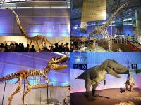 化石とロボット