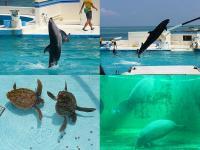 イルカとウミガメとマナティー