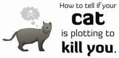 How to tell if your cat is potting to kill you 1