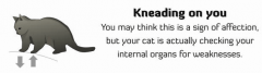 How to tell if your cat is potting to kill you 2