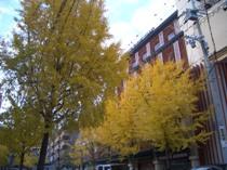 Aしやの秋1