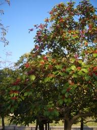 Aしやの秋3