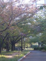 Aしやの秋4