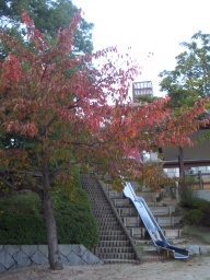 Aしやの秋8