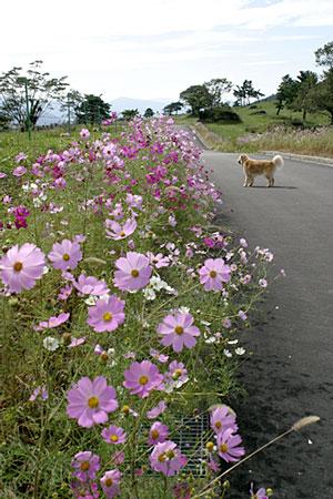 rokuroshi_1.jpg
