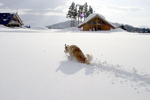 rokuroshi_snow2.jpg