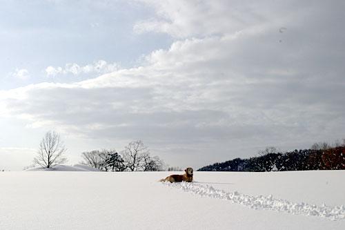 rokuroshi_snow3.jpg