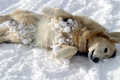rokuroshi_snow4.jpg
