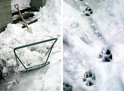 snow_paw.jpg