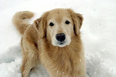 snow_ven.jpg