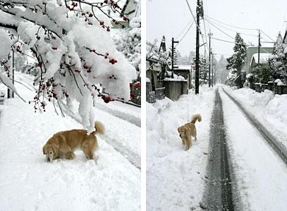 snow_ven2.jpg