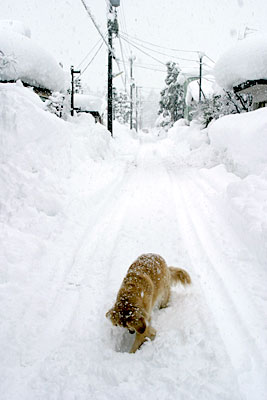 snow_ven4.jpg