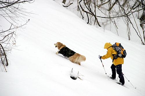 snowshues_2.jpg