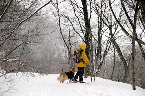 snowshues_3.jpg