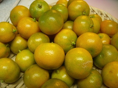 バレンシアリトルレモン収穫