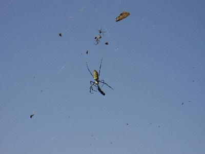 青空に浮かぶクモ