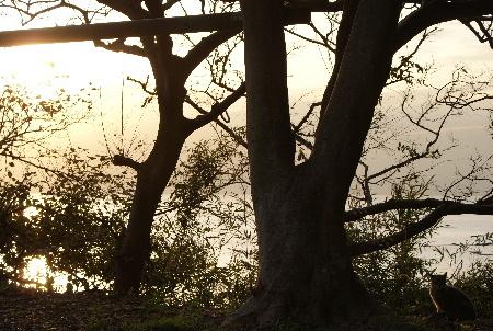 神社の主と夕日を眺める