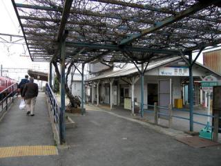 20050320_fuki.jpg