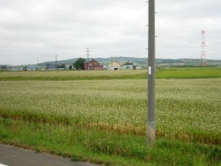 20060814_dohoku_bus-04.jpg