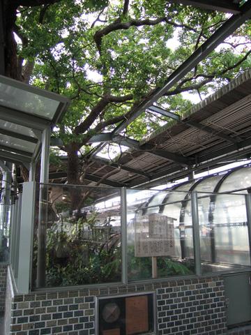 20070902_kayashima-01.jpg