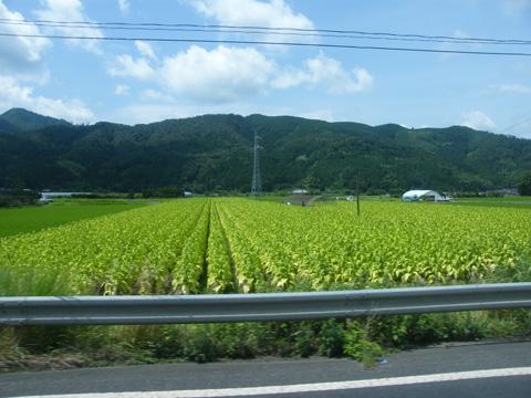 20080719_nikko_bus-02.jpg