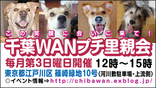 chibawan_satooyakai_weblog320x180.jpg