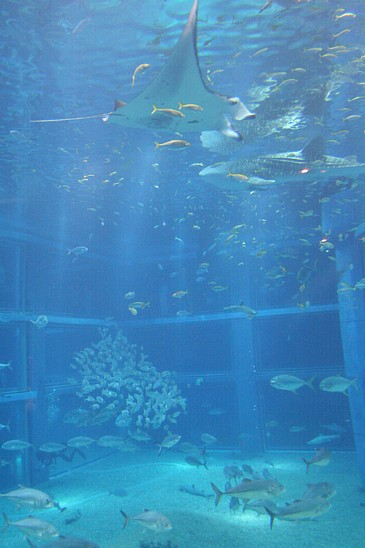 海遊館のジンベイザメS