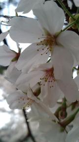 20080406_01.jpg