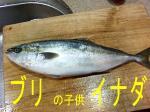 間八の子供、汐っ子05.jpg