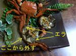山蟹10.jpg