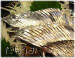 太刀魚1.jpg