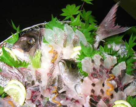 鯛、イサキの姿造り3