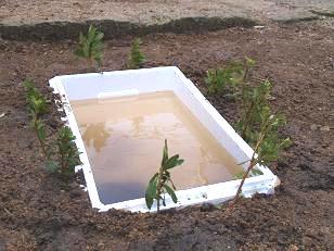 池ができたよ!