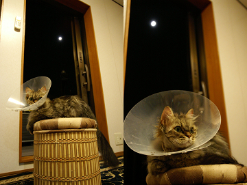 お月さんにゃんⅡ