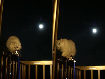 月夜の散歩 3