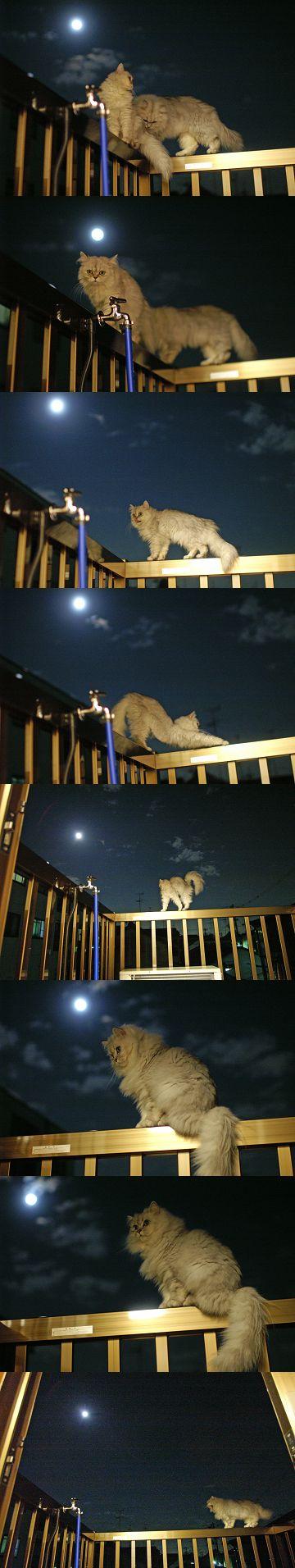 月夜の散歩(08/11/13)