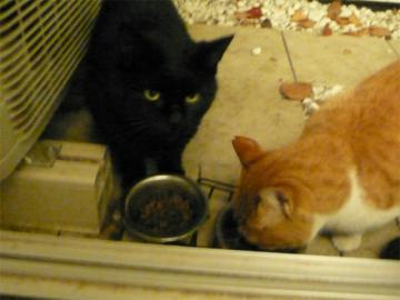 091203cats.jpg