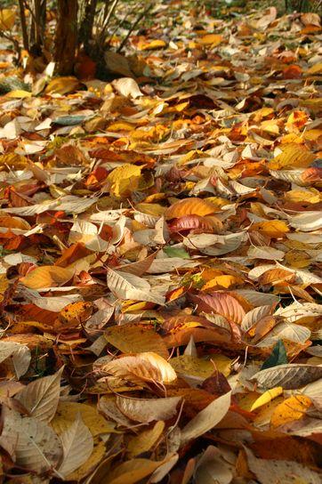 05November2009-01.jpg