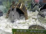 01-rabbits.jpg