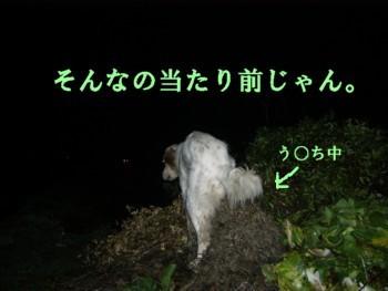 20070324214147.jpg