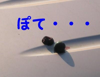 20071016230754.jpg