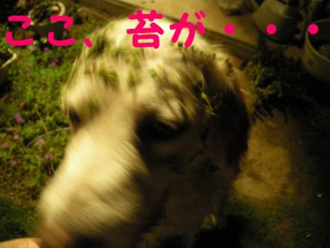 20071102215332.jpg