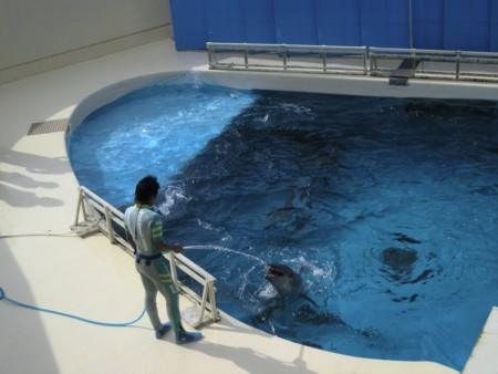 イルカの水遊び