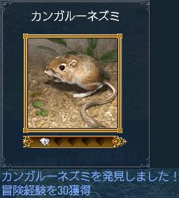 カンガルーネズミ