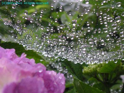 梅雨0703