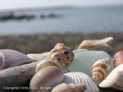 貝殻0817
