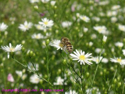 ハチ1008