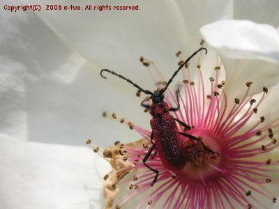 赤い虫0609